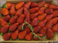 c-k-erdbeeren
